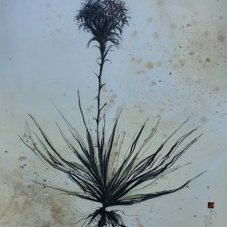 (CreativeWork) Gymea Lily by Angela Ferreira. Drawings. Shop online at Bluethumb.