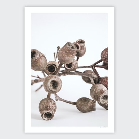 (CreativeWork) Gumnuts Ed. 1 of 40 by Lauren Daly. Print. Shop online at Bluethumb.