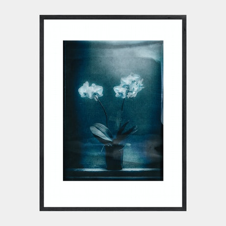 (CreativeWork) Ester's Orchid (Turquoise) FRAMED Ed. 1 of 1 by Mat Hughes. Photograph. Shop online at Bluethumb.