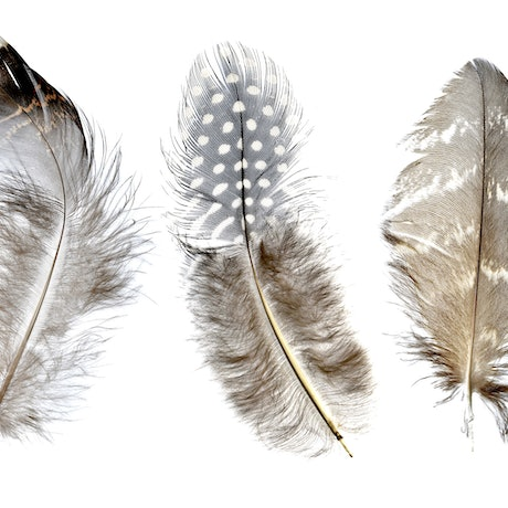 (CreativeWork) Three Feathers Ed. 1 of 10 by Nadia Culph. Photograph. Shop online at Bluethumb.