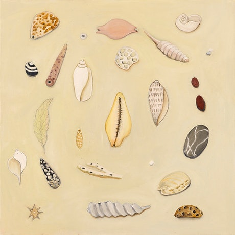 (CreativeWork) Shell Collection by Brenda Runnegar. Oil. Shop online at Bluethumb.