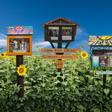 street libraries in a sunflower field surrounded by bees and blue sky