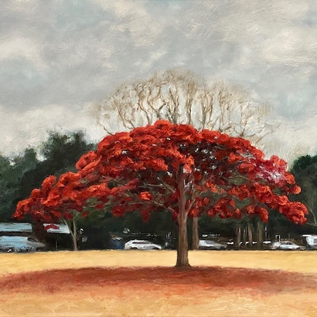 (CreativeWork) New Farm Park series - Poinciana on an Overcast Day by grant windle. Oil. Shop online at Bluethumb.
