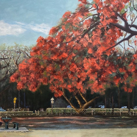 (CreativeWork) New Farm Park series - Old Man Under the Poinciana by grant windle. Oil. Shop online at Bluethumb.
