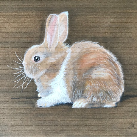 A cute brown and white fluffy bunny rabbit side on, on a brown background.
