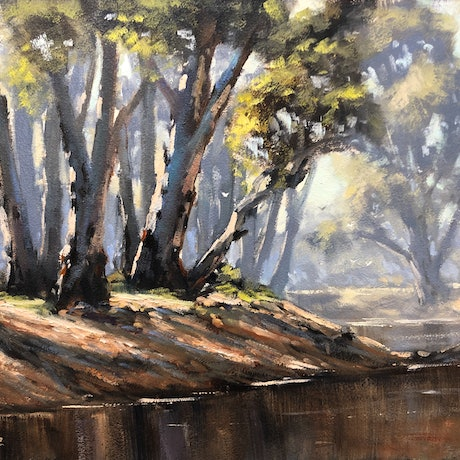 Light streaming through trees on a river bank