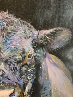 Black Angus bull standing in the darkness with a penetrative stare and full of colour.