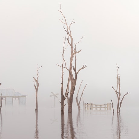 A remnant train station, rail crossing sign and fence emerge from thick fog amongst dead trees filled with sleeping birds.