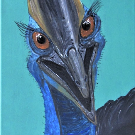 Laughing Cassowary, big eyes, blue face