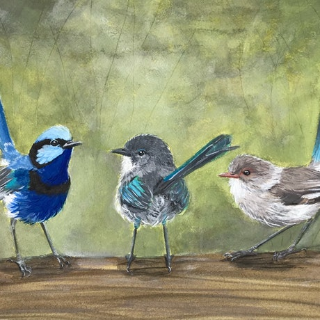 A family of Splendid Fairy wrens, the male, a juvenile and the female all on a log with a green grassy background.
