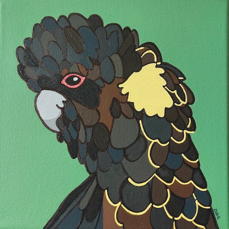 A yellow tail black cockatoo
