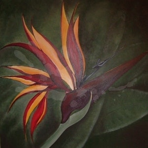 (CreativeWork) Bird of Paradise by Wendy Hillman. arcylic-painting. Shop online at Bluethumb.