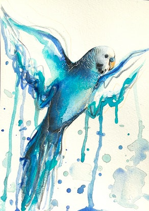 Watercolour blue budgie flying