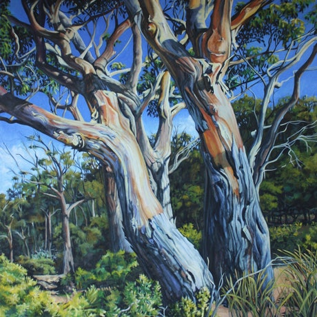 Old gums hit by morning light to show there splendour