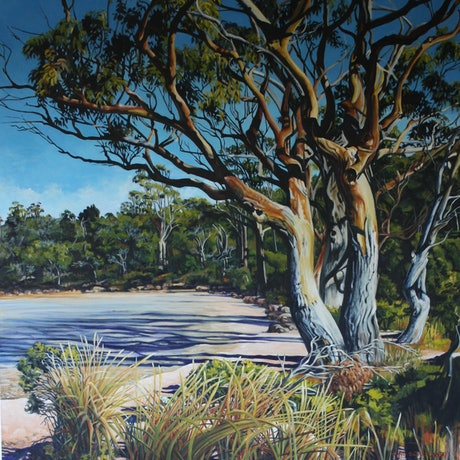 Morning shadows cast by old gums, over a receding tide