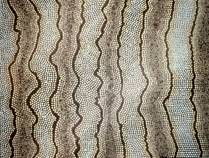 (CreativeWork) Australian Skin Series 1' Eastern Brown snake by Danielle Burford. arcylic-painting. Shop online at Bluethumb.