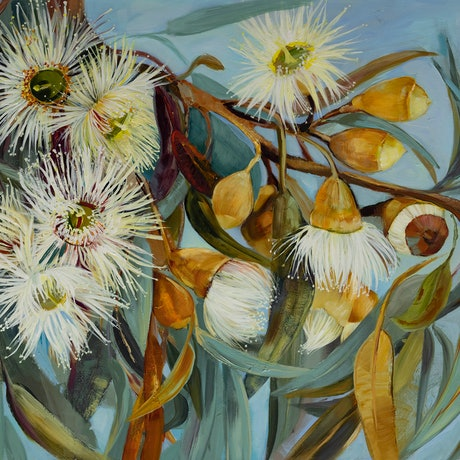 white eucalyptus flowers with olive leaves