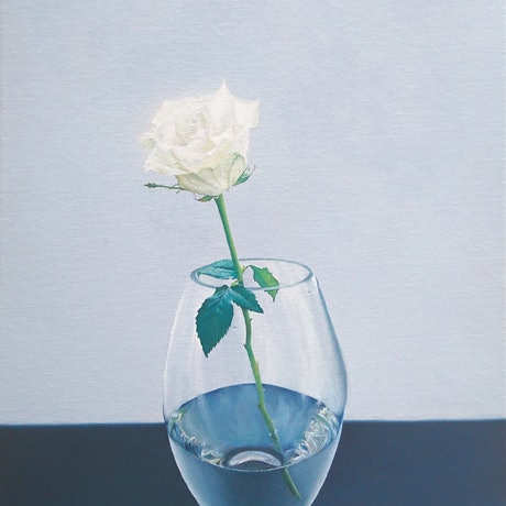 A White Rose In A  Glass Vase