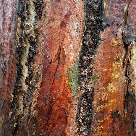 A warm vibrant yet earthy botanical like abstract of nature with lovely texture, detail, tone and depth.