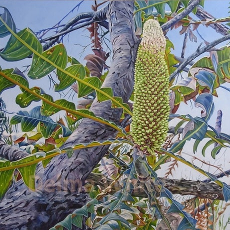 Looking up into the trunk of a Banksia with it's leaves and flower bud.