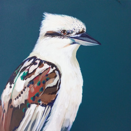 Kookaburra painted on dark Teal background.  51cm x 51cm square deep stretched canvas