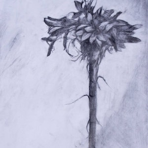 (CreativeWork) Gymea Lily by Leon Lester. drawing. Shop online at Bluethumb.