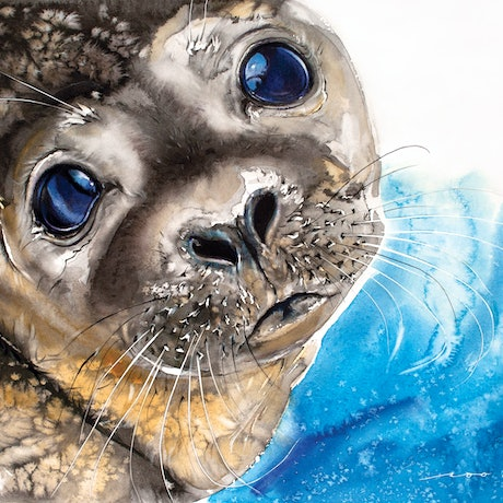 Seal looking up.