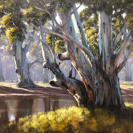 Large gum tree on the banks of a river.