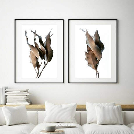 dried leaves on a white background