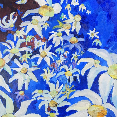 Oil painting of native Australian flannel flowers.