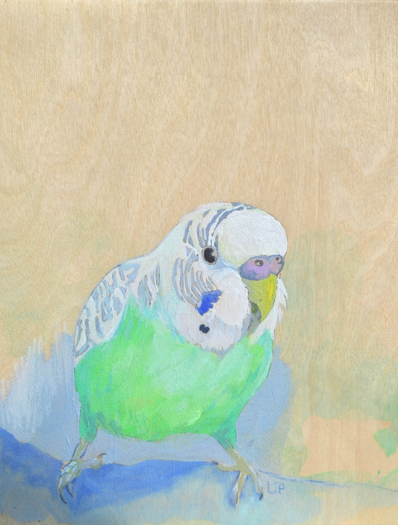 (CreativeWork) Percy (Budgie) by Lydie Paton. mixed-media. Shop online at Bluethumb.