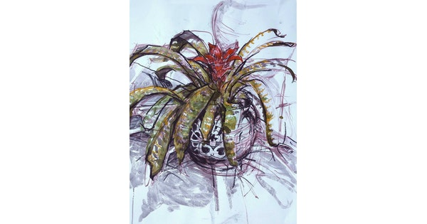 bromeliad by sumei chew paintings for sale bluethumb online art