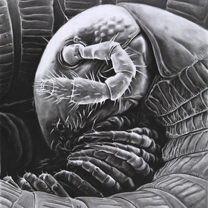 (CreativeWork) millipede by Heath Carter. drawing. Shop online at Bluethumb.