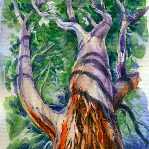 (CreativeWork) Gum Tree by Soo Beng Lim. watercolour. Shop online at Bluethumb.