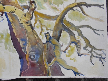 (CreativeWork) River Gum Wilpena Pound by Valda Cuming. watercolour. Shop online at Bluethumb.