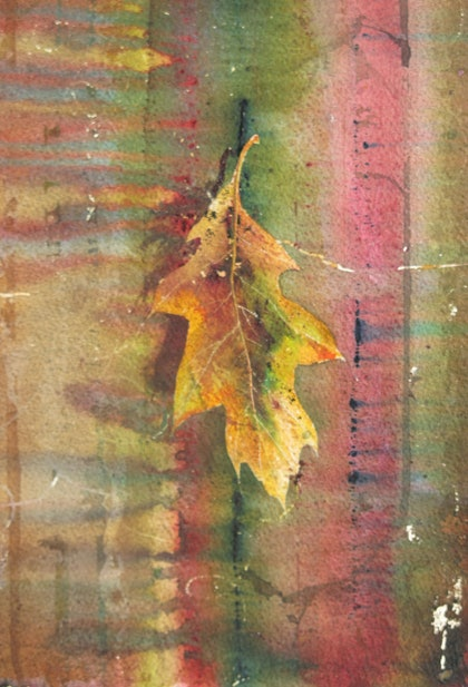 (CreativeWork) north american red oak by malcolm Webster. watercolour. Shop online at Bluethumb.