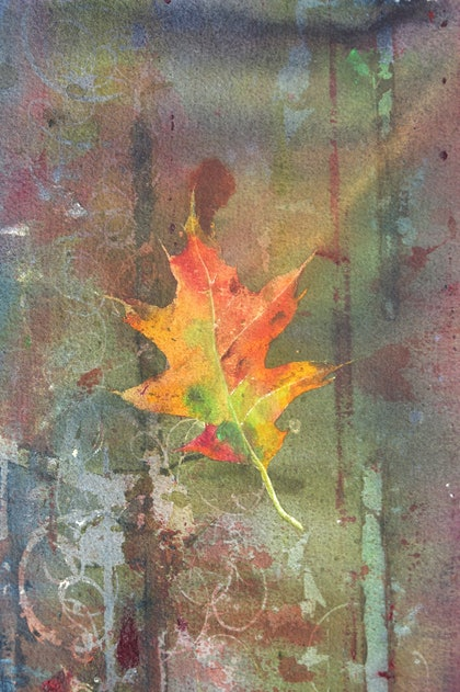 (CreativeWork) north american red oak 4 by malcolm Webster. watercolour. Shop online at Bluethumb.