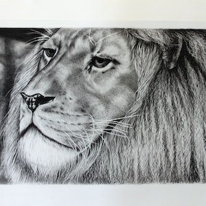 (CreativeWork) Mujambi from Adelaide Zoo in Charcoals by Linda Hammond. drawing. Shop online at Bluethumb.