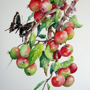 (CreativeWork) Little Apples by Helen Miles. watercolour. Shop online at Bluethumb.