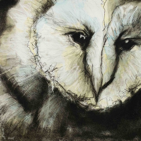 (CreativeWork) Barn Owl, L.E.P.  7/50 by Karen Bloomfield. Mixed Media. Shop online at Bluethumb.