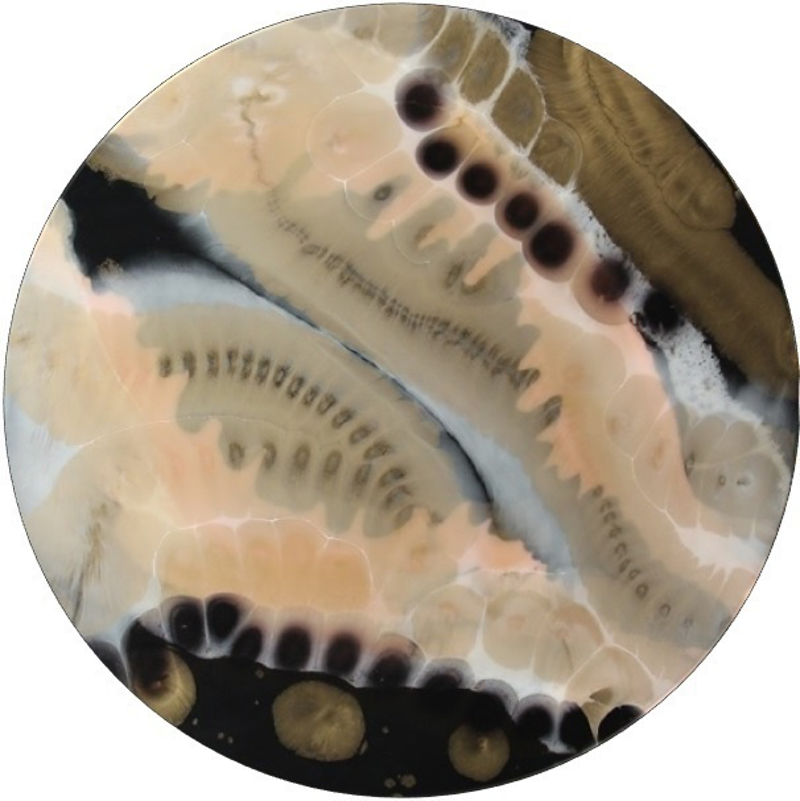 (CreativeWork) Conchology - study of shells - Resin art by Desley Wilson. resin. Shop online at Bluethumb.