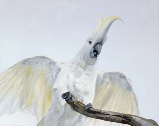"""(CreativeWork) """"Good Morning"""" from the cockatoo by Naomi Veitch. #<Filter:0x000055a41b36afc8>. Shop online at Bluethumb."""