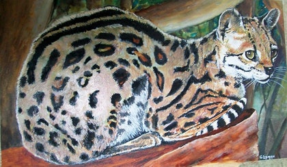 (CreativeWork) margay cat by GREG LIPMAN. oil-painting. Shop online at Bluethumb.