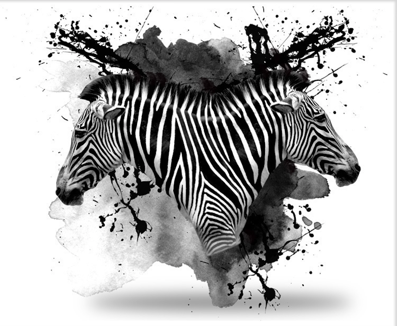 (CreativeWork) Zebra by INDO The Artist. print. Shop online at Bluethumb.
