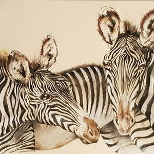 (CreativeWork) Zebra Pair by Nicole Hunt. drawing. Shop online at Bluethumb.