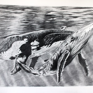 (CreativeWork) Whales Charcoal on Archers Paper Unframed 75cm (W) x 55cm (H) x 1cm (D) by Linda Hammond. drawing. Shop online at Bluethumb.