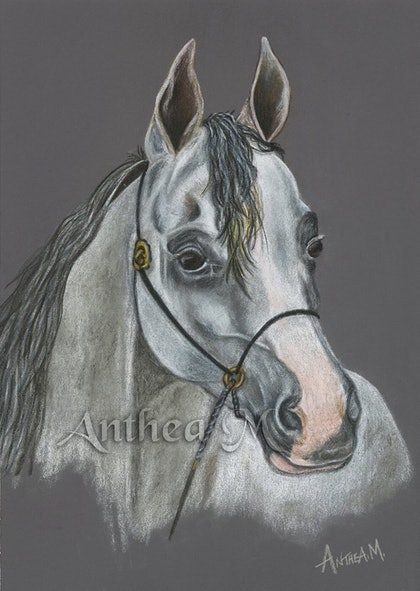 (CreativeWork) Arabian Horse by Anthea Marcella. other-media. Shop online at Bluethumb.