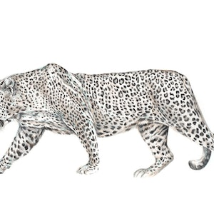 (CreativeWork) PANTHERA PARDUS // LIMITED EDITION GICLÉE PRINT by Jess Le Clerc. print. Shop online at Bluethumb.
