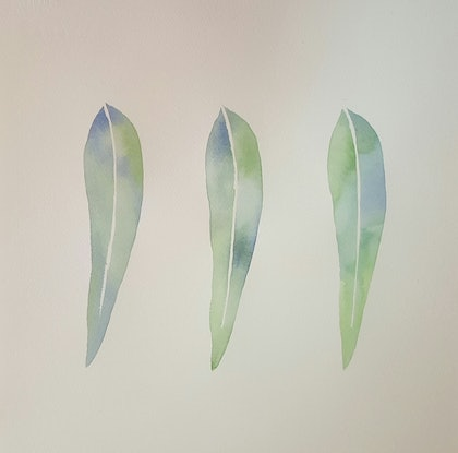 (CreativeWork) Eucalyptus  by Amy Sabella. watercolour. Shop online at Bluethumb.