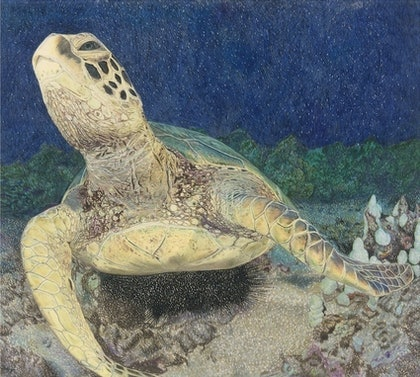 (CreativeWork) Green sea turtle Ed. 1 of 10 by Sim Hunt. print. Shop online at Bluethumb.